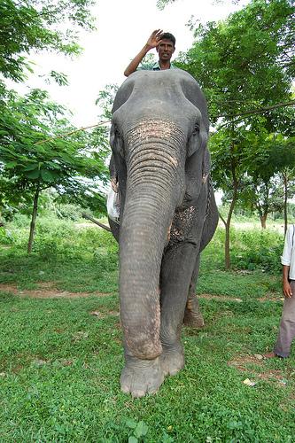 elefante-bangladesh.jpg