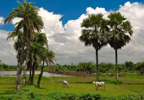 bangladesh-paisaje.jpg